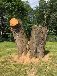 Tree and stump removal- trimming