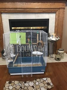 2 Fancy lovebirds (cage included)