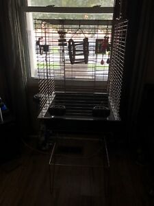 Bird and cage for sale!