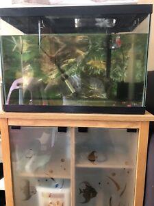 25 gallon aquarium with stand