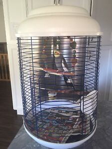 Male Cockatiel and cage $120 Firm
