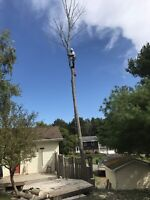 Tree & Limb Removal & Stump Grinding Services Free Quotes