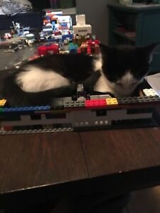 Welcome to our last female LEGO helper kitten
