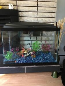 20 gallon aquarium/ fish tank