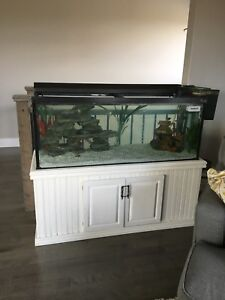Looking to take over fish tank