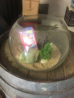 Fish bowl with extras
