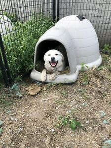 Guard Dog to Good Home - CURRENTLY TRYING NEW HOME
