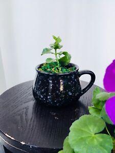Adoptez une plante - Kalanchoe à fleurs roses