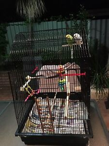 Birds and Cage Kingsley Joondalup Area Preview