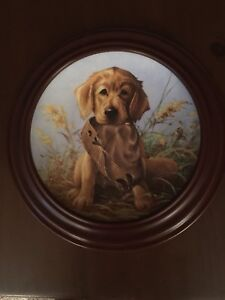 Collector plates- Field Puppies series