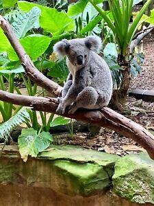 Ticket for Australian zoo