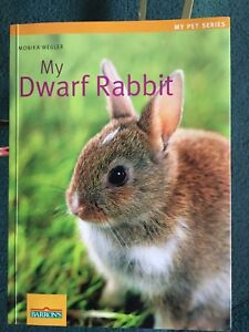 Dwarf Rabbit Pet Guide