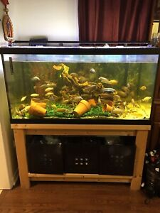 Selling 120 Gallon Cichlid set-up