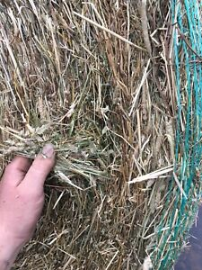 Round bales horse hay for sale delivery available