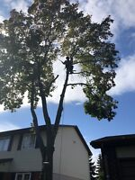 Tree trimming and removal Ottawa /Gatineau