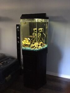 35g tank and stand with cichlids