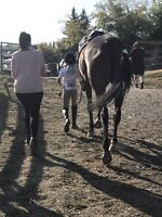 Professional English Horseback Riding Lessons