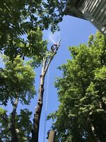 Tree & Limb Removal, Lot Clearing & Chipping Services