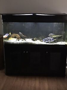Jebo 5x2x2 acrylic fish tank North Haven Port Adelaide Area Preview