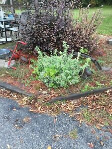 Weed puller plant trimmer
