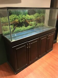 Large fish tank aquarium