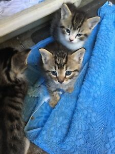 ADORABLE BABY KITTENS