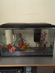 Fish tank & 5 goldfish