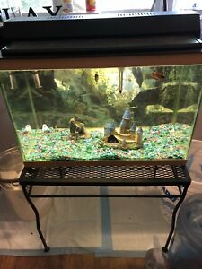 Fish tank + everything you need and fish