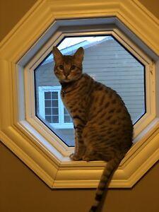 Found him! Lost cat Moncton