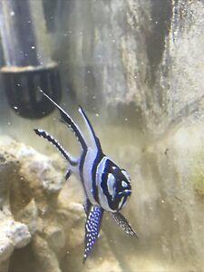 Saltwater fish/coral