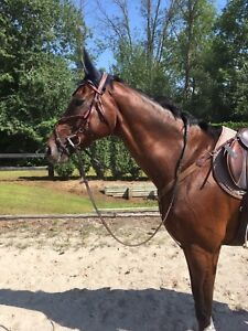 Very sweet gelding for your consideration