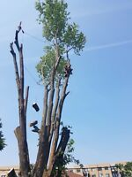 ●CITY OF OTTAWA TREE REMOVAL SPECIALISTS!CALL NOW AND SAVE BIG!●