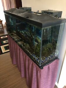 55 Gallon Complete Fish Tank Setup