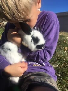 Bunnie rabbit rabbits cute pets