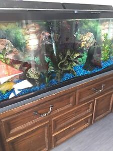 55 Glass Gallon Tank with everything