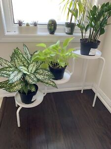 3 tier plant stand-25$