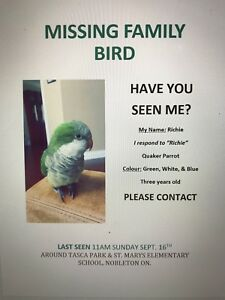 MISSING FAMILY BIRD