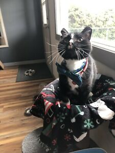 ISO FIV positive cat