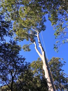 Arborist available Newcastle Newcastle Area Preview