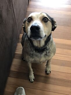 Old man Stan needs a new home!