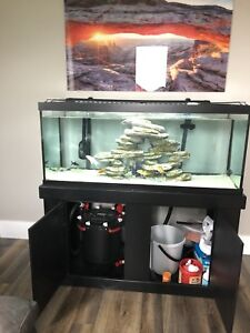 75 Gallon everything included