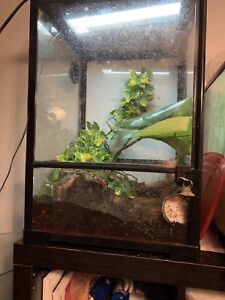 Tree frogs and basic bioactive set up