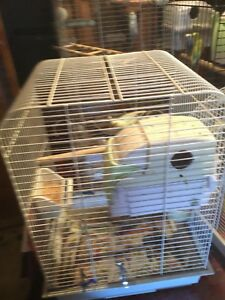 13 budgies And 4 cages needs gone
