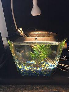 Small aquarium / fish tank approx 1-2 gal