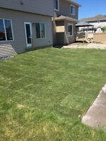 Sod and installation for 50 cents per square foot