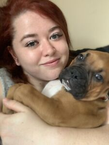 Boxer | Adopt Dogs & Puppies Locally in Nova Scotia | Kijiji