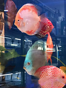 Assorted Discus Cabramatta West Fairfield Area Preview