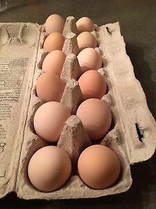 Fertilized Eggs for Sale