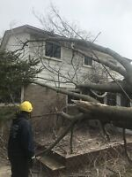 Professional tree services . Storm damage were here 24/7!