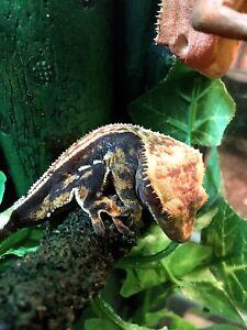 Plusieurs reptiles a vendre !!!
